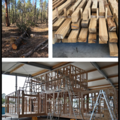 grid image of pine tree, cut pine and pine building construction